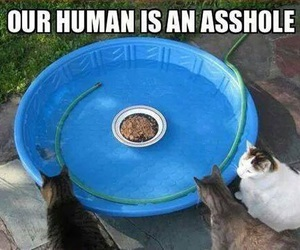 cat food, funny, and cats image