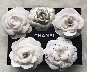 camellia, chanel, and chanel flower image
