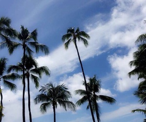 blue, palm trees, and theme image