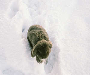 rabbit, snow, and cute image