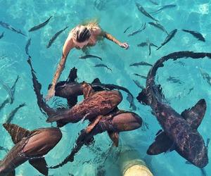 girl, summer, and animal image