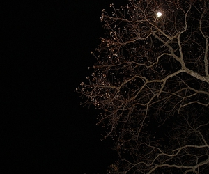 branches, light, and moon image