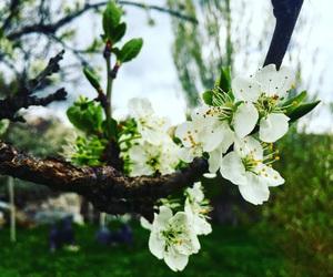 apricot, beautiful, and fresh image