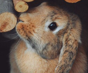 bunny and cute animals image