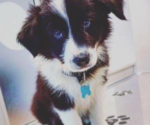 blackandwhite, cutie, and dog image
