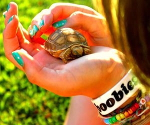 turtle, summer, and bracelets image