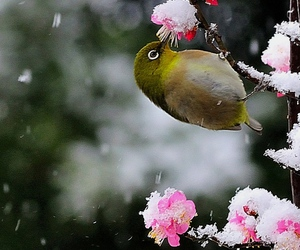 bird, flower, and blossoms image
