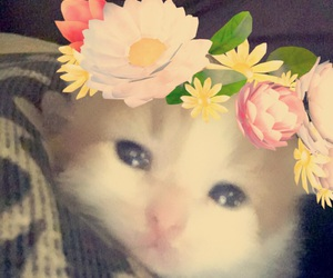 filters, kitten, and snapchat image