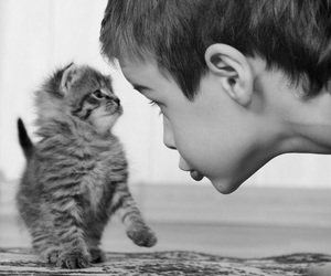 cat, boy, and kitten image