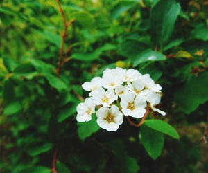 flower, green, and nature image