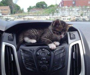 cat, car, and cute image