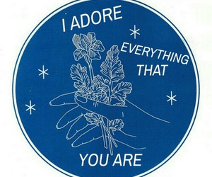 blue, quotes, and adore image