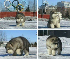 cute, dog, and fluffy image