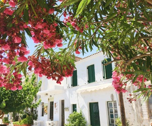flowers, Greece, and paradise image
