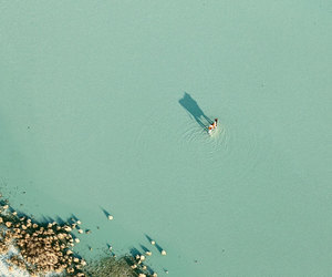 abstract, aerial, and cow image