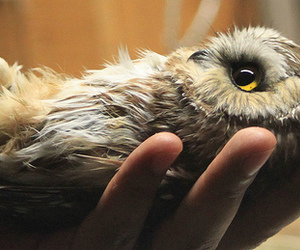 hand, owl, and cute image