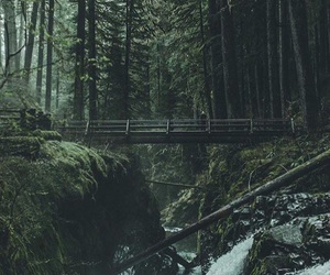 aesthetic, alternative, and forest image