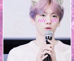 cat, exo, and icons image