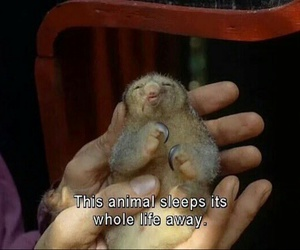 baby animals, sloth, and cutie image