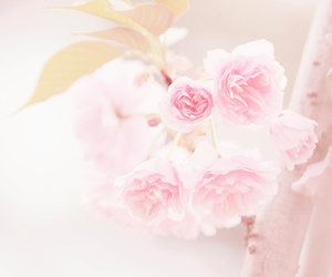 flowers and pastel image