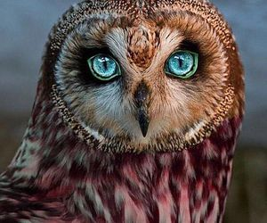 owl, animal, and eyes image