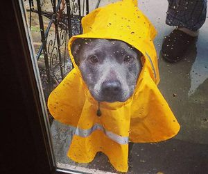 dog, cute, and rain image