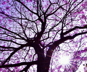 tree and nature image