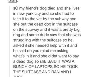 funny, new york, and tumblr image