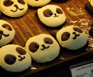 panda and food image