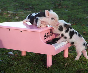 cute, pig, and adorable image