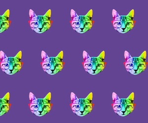 cats and wallpapers image