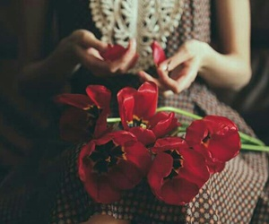 flowers, red, and annao. image
