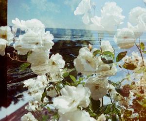 35mm, analog, and beach image