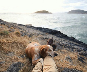 nature, dog, and travel image