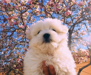 flowers, puppy, and cute image