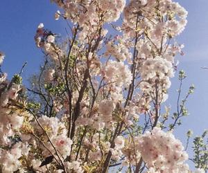 boom, summer, and bloemen image