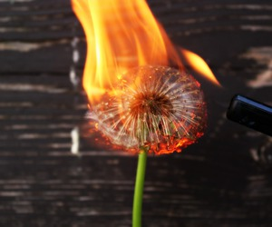 flower, alternative, and fire image