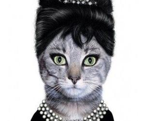 cat, audrey hepburn, and funny image