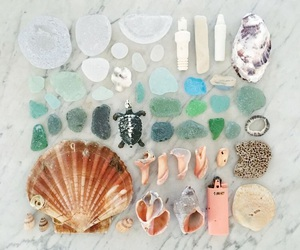 beach, sea, and shell image