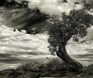 swet, black and white, and photography image