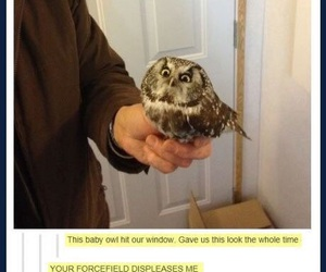 funny, owl, and tumblr image
