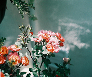 analogue, film, and flowers image