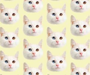 cat, patterns, and tumblr image
