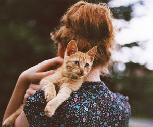 cat, girl, and photography image