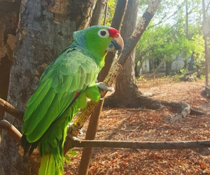bird, colombia, and parrot image