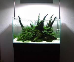 aquarium, aquascaping, and luis moniz image