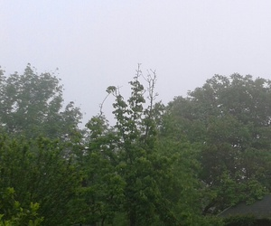 dull, green, and fade image