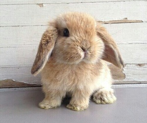 cute, animal, and bunny image