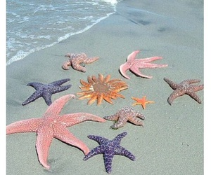 beach, happy, and starfish image