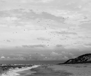 beach, bird, and clouds image